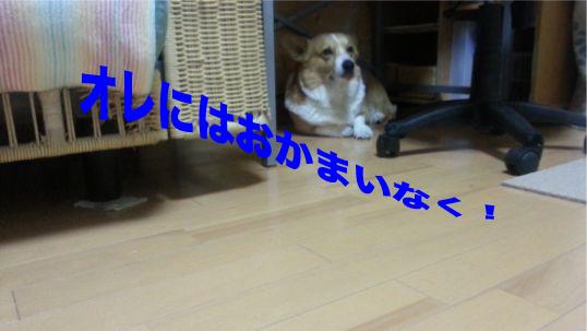 2_20140125134133d4e.jpg