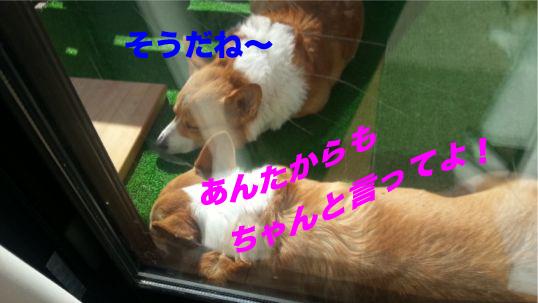 2_2014012918174730b.jpg