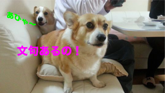 2_20140205100251ccb.jpg