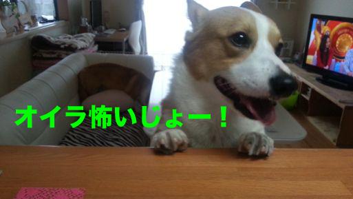 2_20140210122227382.jpg