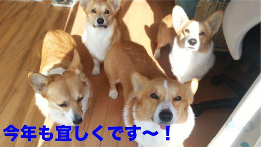 3_20140102113419644.jpg