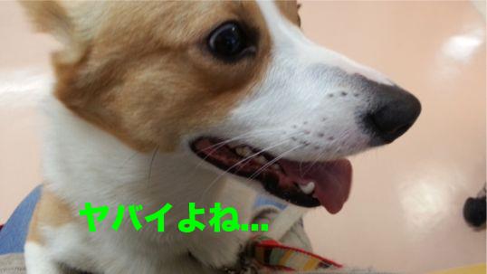 3_2014011113452262d.jpg