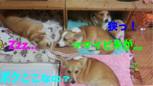 3_20140115142220519.jpg