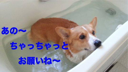 3_20140119130237b09.jpg