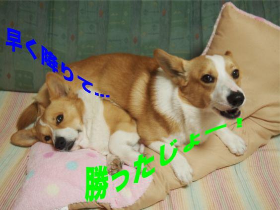 3_201401271746526b9.jpg