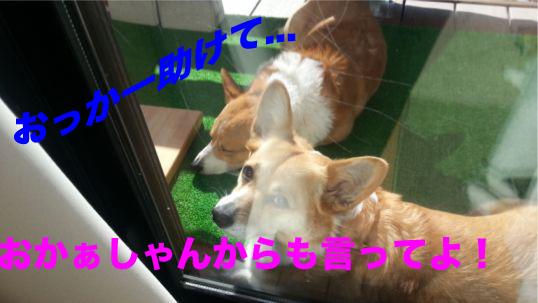 4_2014012918175386d.jpg