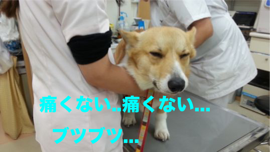 5_20140111134525e2c.jpg
