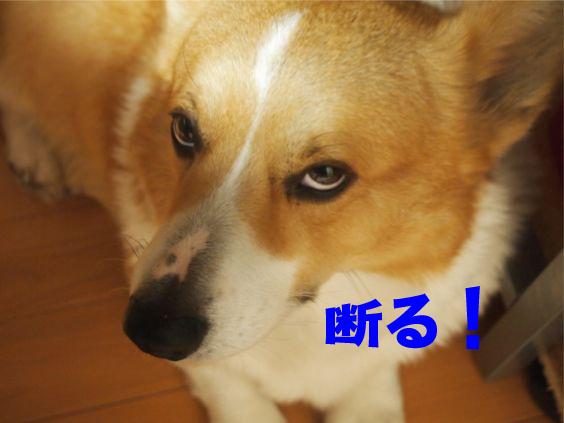 5_201401211808560b9.jpg