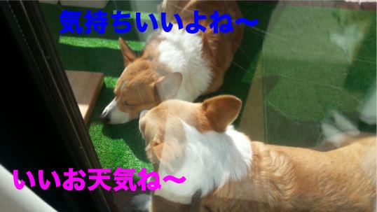 5_2014012918191325a.jpg