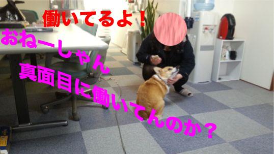 6_20140124133536dd0.jpg