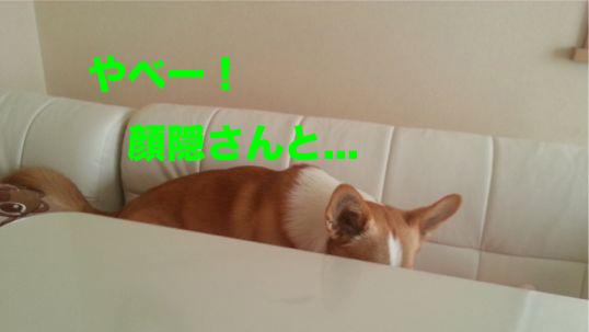 6_20140205205951832.jpg
