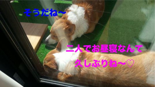 7_201401291819169e5.jpg