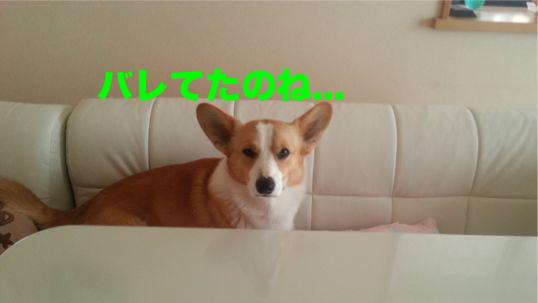 7_20140205205952a9d.jpg