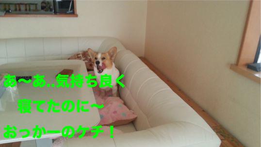 8_201402052059555d8.jpg