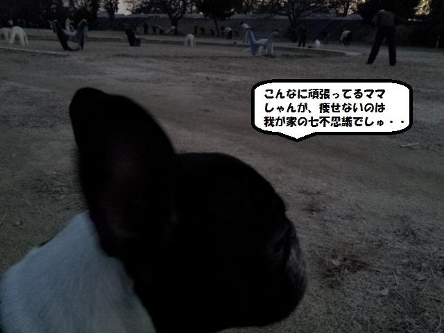 20121214_063855[2]