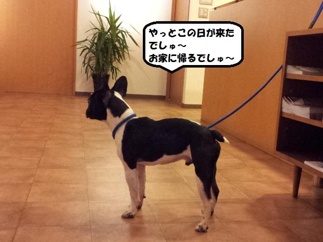 20121227_183231.jpg