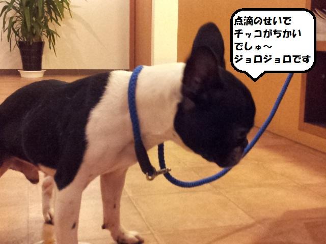 20121227_183244.jpg