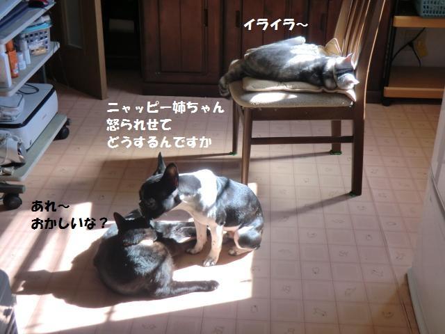 CIMG5649_convert_20121031073451.jpg