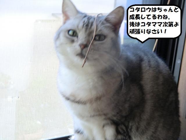 CIMG5947_convert_20130127224053.jpg