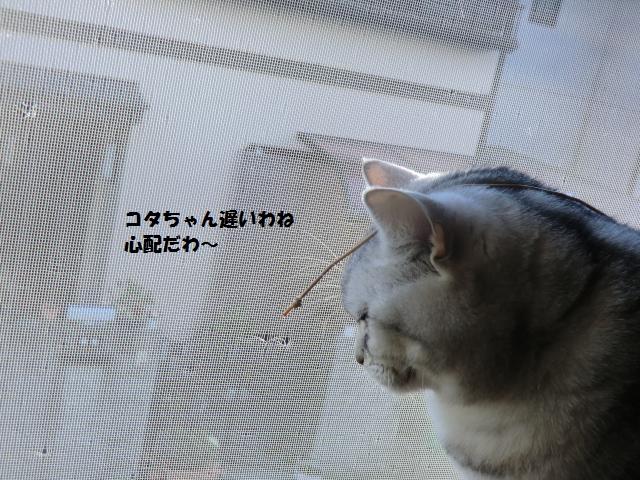 CIMG5948_convert_20130209213538.jpg