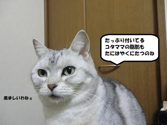 CIMG6108_convert_20130219203009.jpg