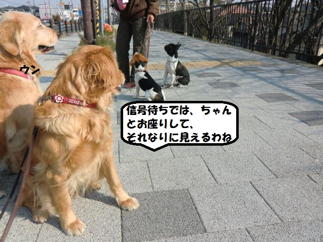 CIMG6206_convert_20130307160939.jpg