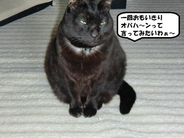 CIMG6214_convert_20130324195748.jpg