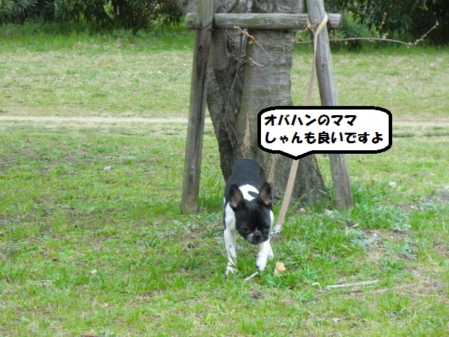CIMG6240_convert_20130324200033.jpg