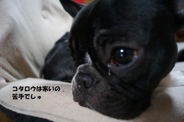 DSC00035_convert_20121113070503.jpg