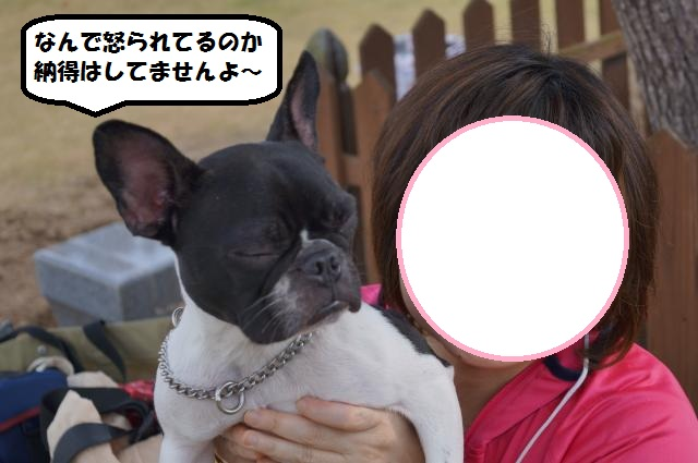 DSC00125_convert_20121119210623.jpg