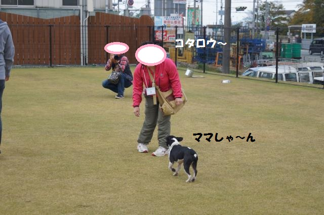 DSC00136_convert_20121120211906.jpg