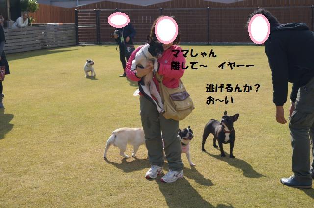 DSC00189_convert_20121119210500.jpg
