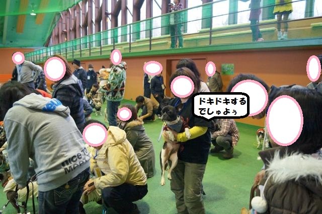 DSC00342_convert_20121125100912.jpg