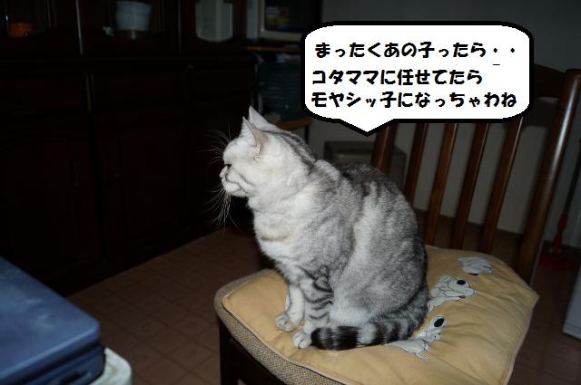 DSC00664_convert_20121211204211.jpg