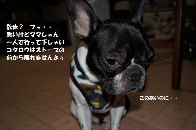 DSC00672_convert_20121211204433.jpg