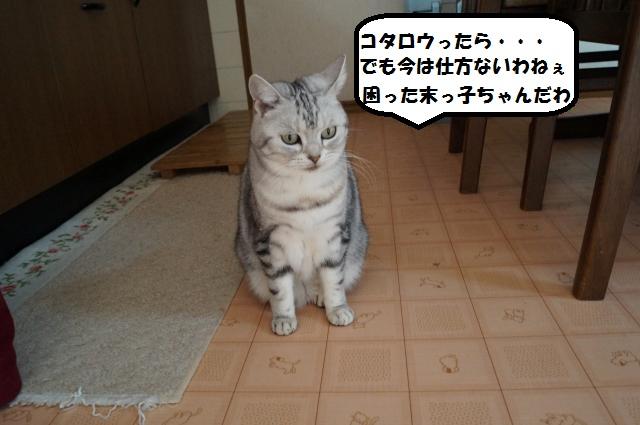 DSC00800_convert_20121229100006.jpg