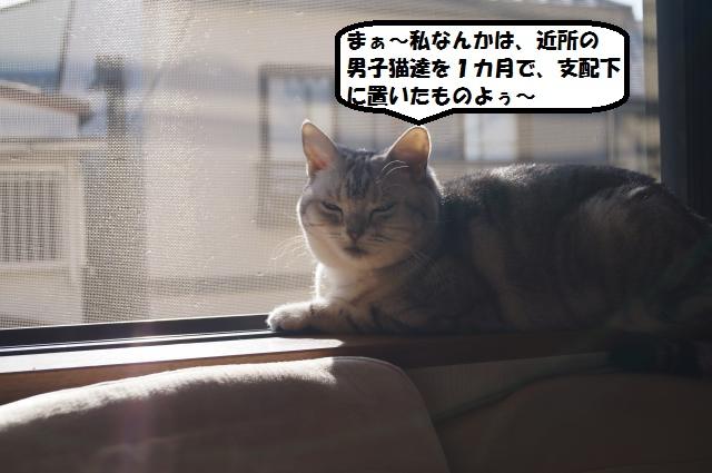 DSC00804_convert_20121231194335.jpg