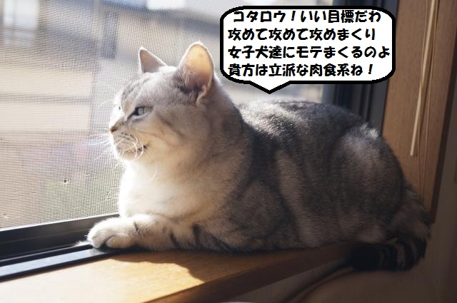 DSC00805_convert_20121231194427.jpg