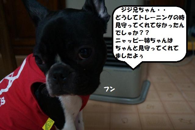 DSC00967_convert_20130121202246.jpg