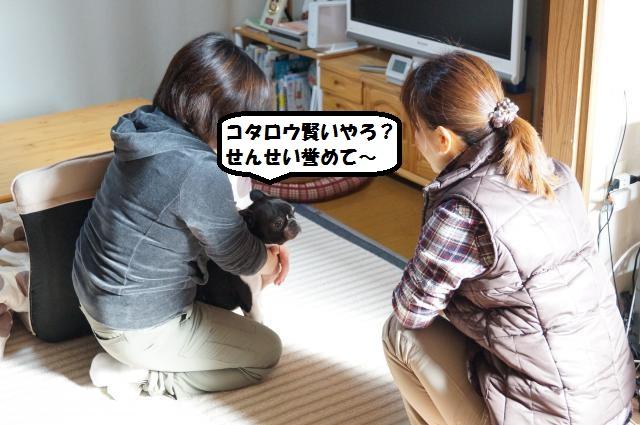 DSC00977_convert_20130120203348.jpg