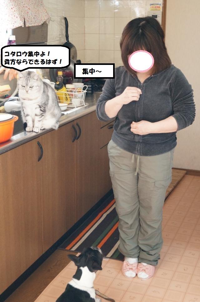 DSC00993_convert_20130120203626.jpg