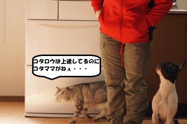 DSC01164_convert_20130212194117.jpg