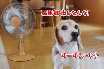 扇風機 5