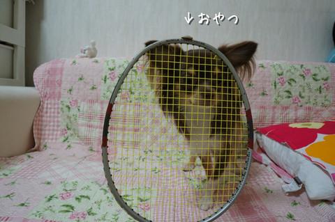 kotetu11_20120804230554.jpg