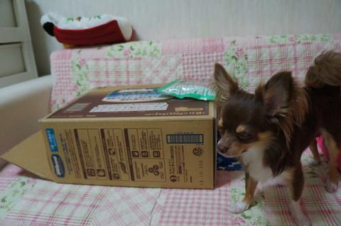 kotetu2_20120717221625.jpg