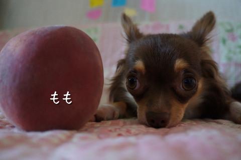 kotetu4_20120717224354.jpg