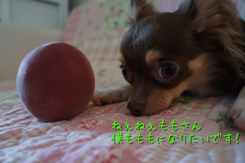 kotetu5_20120717224354.jpg