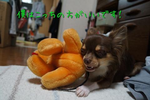 kotetu6_20120725211238.jpg