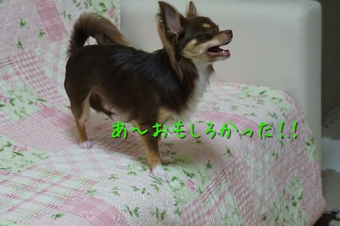 kotetu7_20120802220537.jpg