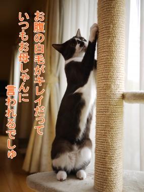 013_convert_20120609165511.jpg
